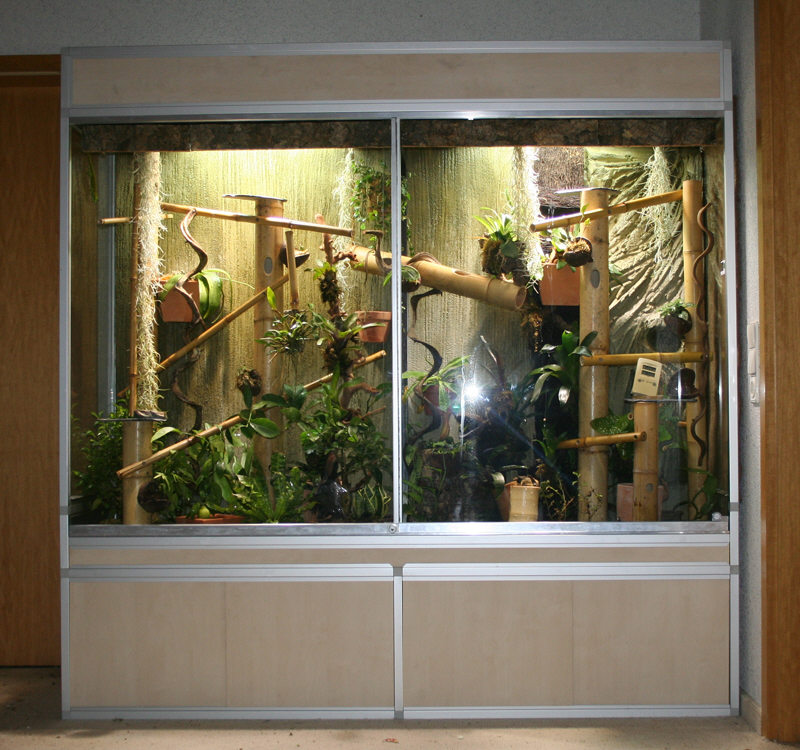 terrarien bauen 190x55x190cm phelsuma grandis. Black Bedroom Furniture Sets. Home Design Ideas